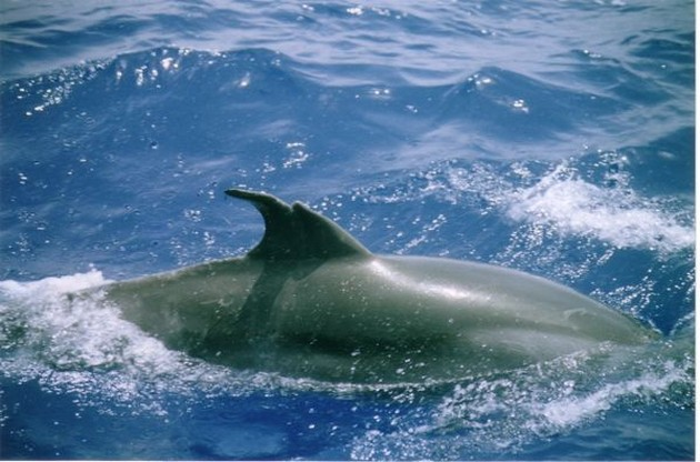 Gran Canaria fishing news - Cavalier & Blue Marlin Sport Fishing Gran Canaria