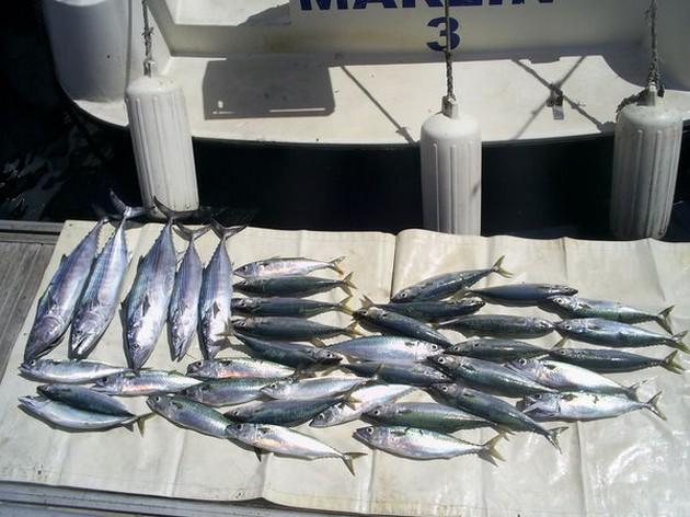 Vandaag opnieuw een bootrecord opnaam van onze Friese - Cavalier & Blue Marlin Sport Fishing Gran Canaria