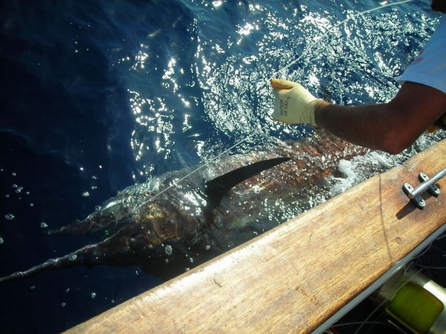Puerto Rico - 17.30 uurTAG & RELEASEBlue Marlin 3 heeft - Cavalier & Blue Marlin Sport Fishing Gran Canaria