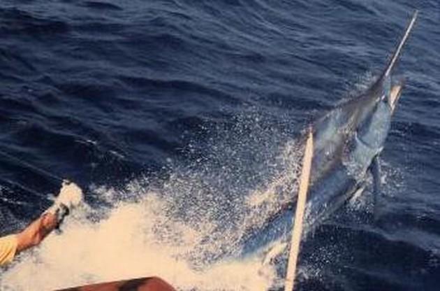 Puerto Rico - 17.45 uurMINDER DAN 10 MINUTENIn minder - Cavalier & Blue Marlin Sport Fishing Gran Canaria