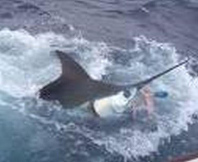Puerto Rico - 17.15 uur2 BLAUWE MARLIJNEN LOSOp zowel - Cavalier & Blue Marlin Sport Fishing Gran Canaria