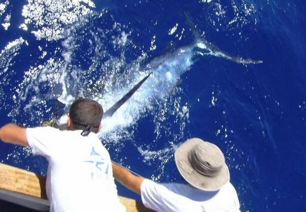 Puerto Rico - 18.45 uurBLAUWE OP DE BLUEVandaag was - Cavalier & Blue Marlin Sport Fishing Gran Canaria