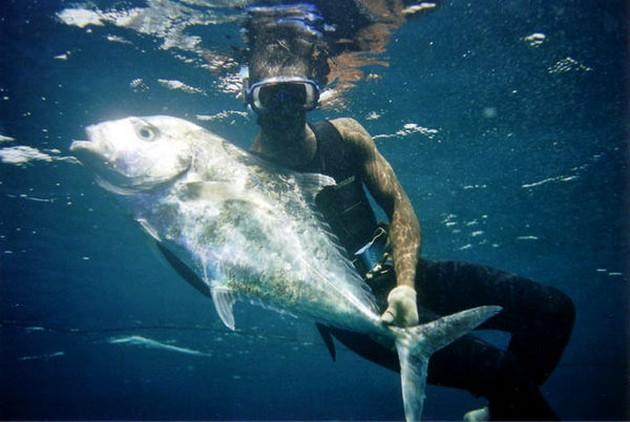 Cordonnnier Bossu - Cavalier & Blue Marlin Sport Fishing Gran Canaria