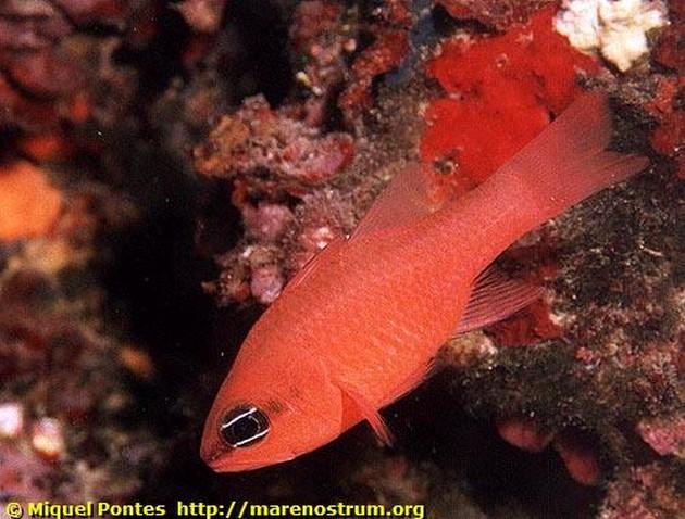 Pomatome Telescope - Pesca Deportiva Cavalier & Blue Marlin Gran Canaria