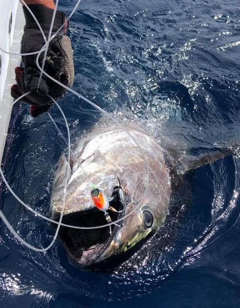 Trolling - Cavalier & Blue Marlin Sport Fishing Gran Canaria