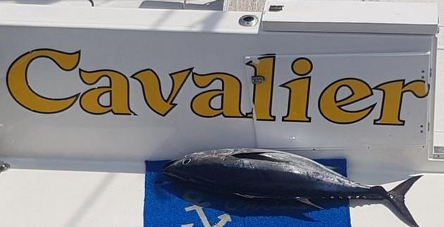 Bingo 30 KG! - Cavalier & Blue Marlin Sport Fishing Gran Canaria