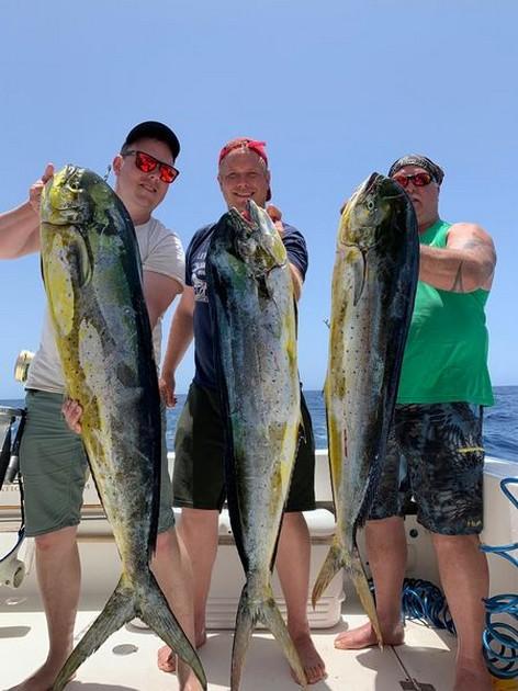 3 Dorado's - Cavalier & Blue Marlin Sport Fishing Gran Canaria