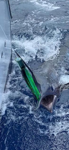 Het barst ervan!! - Cavalier & Blue Marlin Sport Fishing Gran Canaria