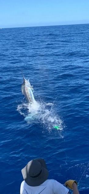 400 lb Blue Marlin - Cavalier & Blue Marlin Sport Fishing Gran Canaria