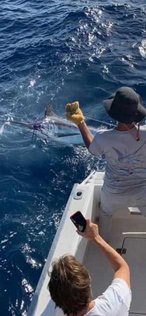 200 lb Blue Marlin - Cavalier & Blue Marlin Sport Fishing Gran Canaria
