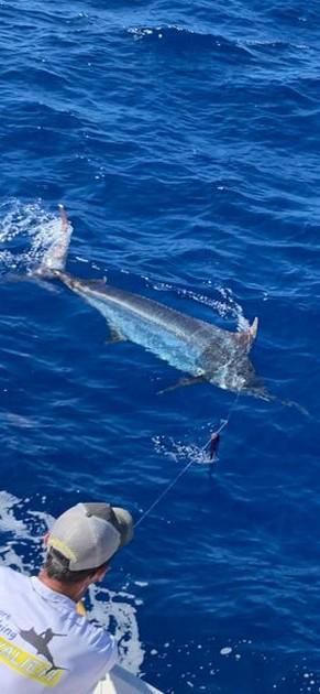Woooooow - Cavalier & Blue Marlin Sport Fishing Gran Canaria