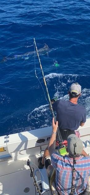 1/2 Blue - 0/1 White - Cavalier & Blue Marlin Sport Fishing Gran Canaria