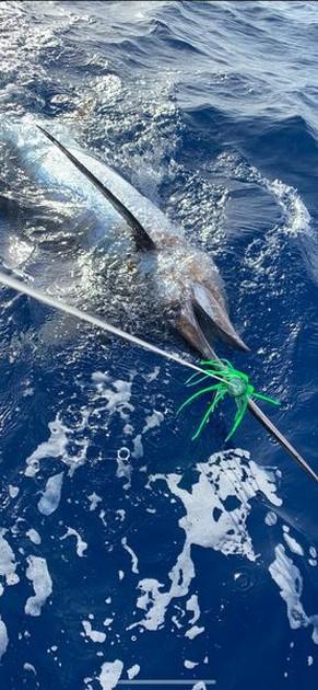 No: 55 - Cavalier & Blue Marlin Sport Fishing Gran Canaria