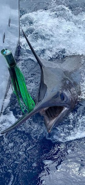 BULL SHIT - Cavalier & Blue Marlin Sport Fishing Gran Canaria
