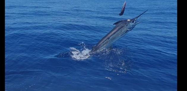 Exciting ! - Cavalier & Blue Marlin Sport Fishing Gran Canaria
