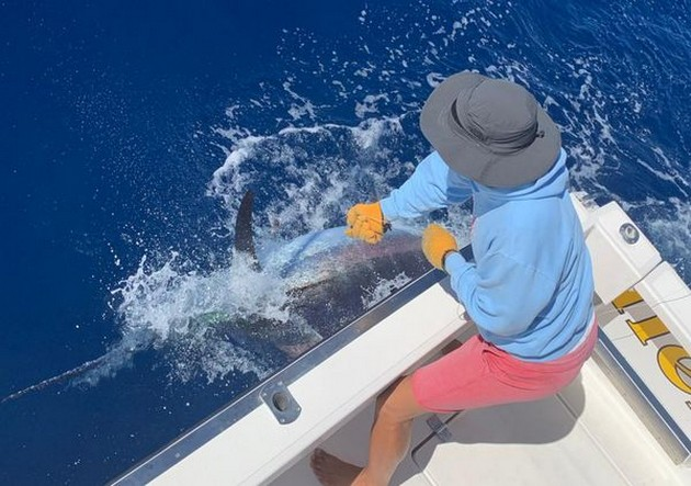 Incredible - Cavalier & Blue Marlin Sport Fishing Gran Canaria