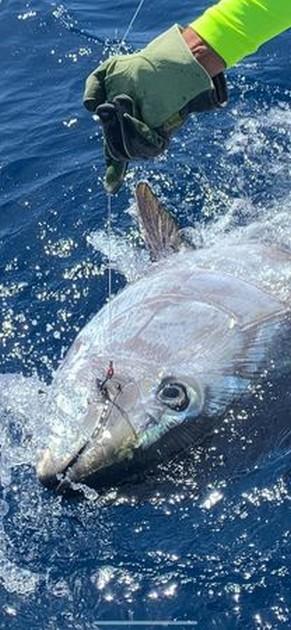 200 kg Bluefin - Cavalier & Blue Marlin Sport Fishing Gran Canaria