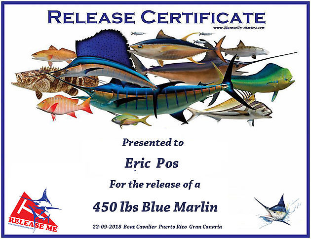 Catch or Release Certificate - Cavalier & Blue Marlin Sport Fishing Gran Canaria