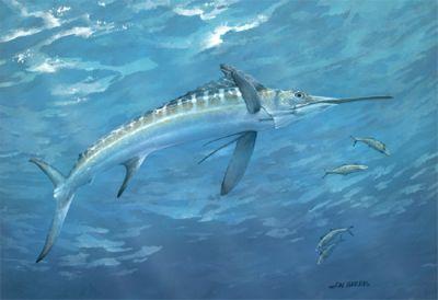 Makaire Blanc de Atlantique - Pesca Deportiva Cavalier & Blue Marlin Gran Canaria