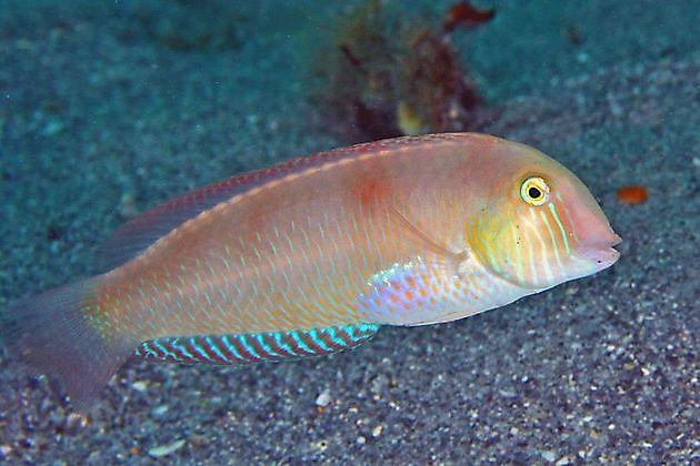unknown - Cavalier & Blue Marlin Sport Fishing Gran Canaria