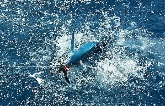 Quiet - Cavalier & Blue Marlin Sport Fishing Gran Canaria