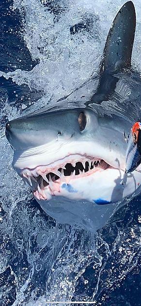 Klaas release Blue Marlin & Mako Shark - Cavalier & Blue Marlin Sport Fishing Gran Canaria