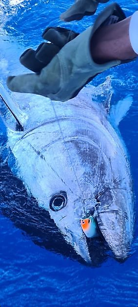 Bluefin Tuna Nr 7 & 8 - Cavalier & Blue Marlin Sport Fishing Gran Canaria