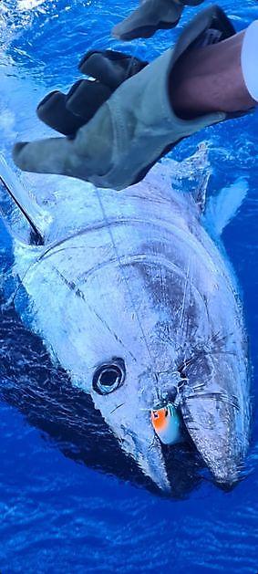 Roter Thun Nr. 7 & 8 - Cavalier & Blue Marlin Sportfischen Gran Canaria