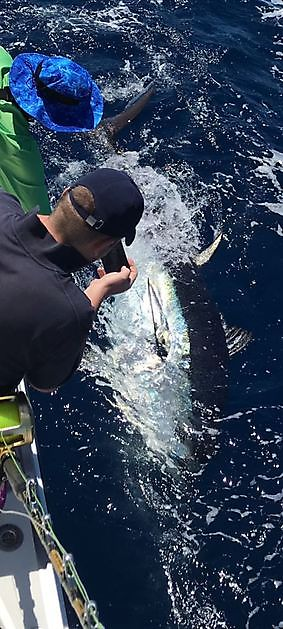 1/2 Blauwvin tonijn - Cavalier & Blue Marlin Sport Fishing Gran Canaria