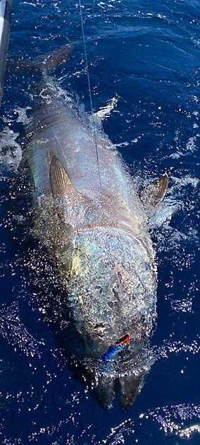 Stimato a 600 libbre - Cavalier & Blue Marlin Pesca sportiva Gran Canaria