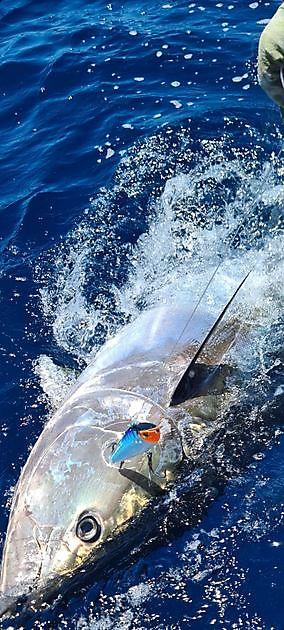 2/3 de atún rojo - Pesca Deportiva Cavalier & Blue Marlin Gran Canaria
