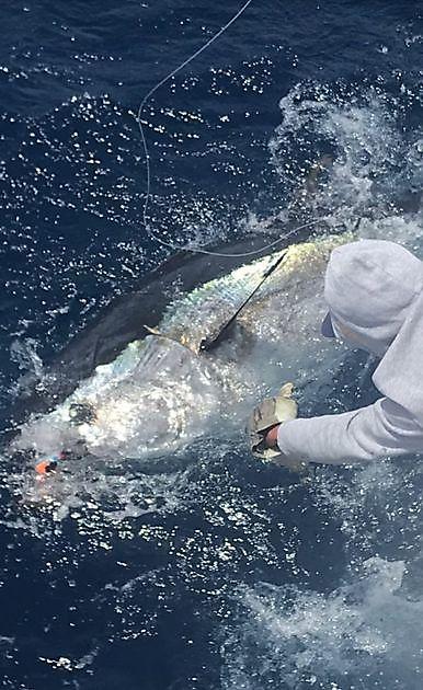 24 ° atún rojo + 1 wahoo - Pesca Deportiva Cavalier & Blue Marlin Gran Canaria