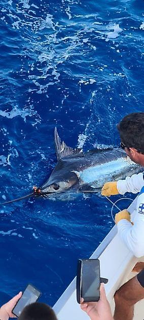 El show continúa - Pesca Deportiva Cavalier & Blue Marlin Gran Canaria