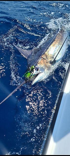 Plenty of Big Game Action - Cavalier & Blue Marlin Sport Fishing Gran Canaria
