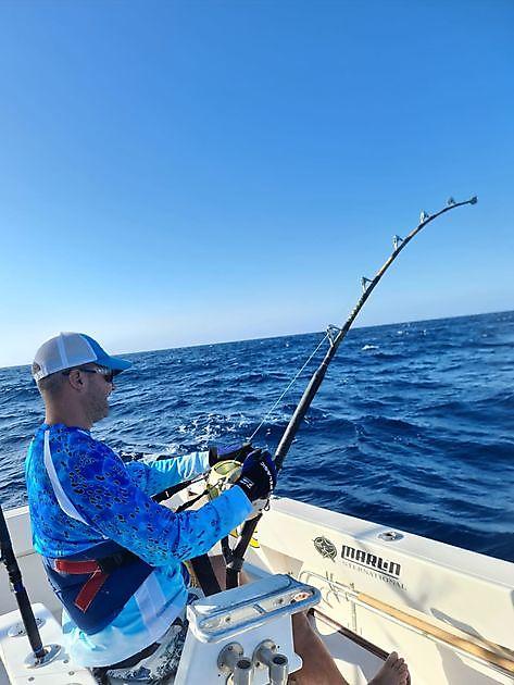 1/2 Blue Marlin - Cavalier & Blue Marlin Sport Fishing Gran Canaria