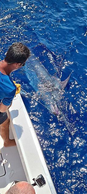 Marlin azul - Pesca Deportiva Cavalier & Blue Marlin Gran Canaria