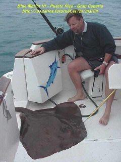vanlig stingray Cavalier & Blue Marlin Sport Fishing Gran Canaria