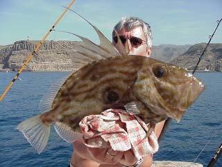 john dory Cavalier & Blue Marlin Sport Fishing Gran Canaria