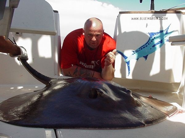 28/03 round stingray Cavalier & Blue Marlin Sport Fishing Gran Canaria