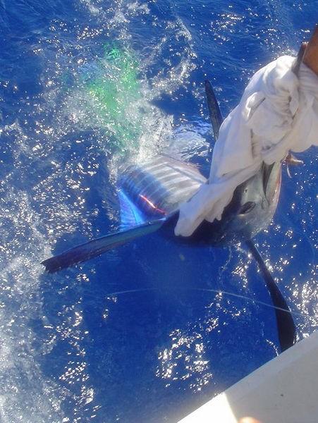 23/06 spearfish Cavalier & Blue Marlin Sport Fishing Gran Canaria