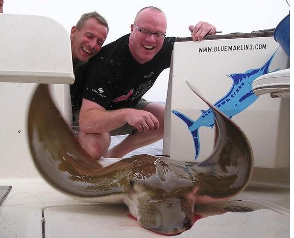 11/09 duckbill ray Cavalier & Blue Marlin Sport Fishing Gran Canaria