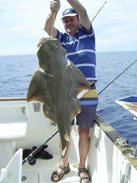 18/10 angel shark Cavalier & Blue Marlin Sport Fishing Gran Canaria