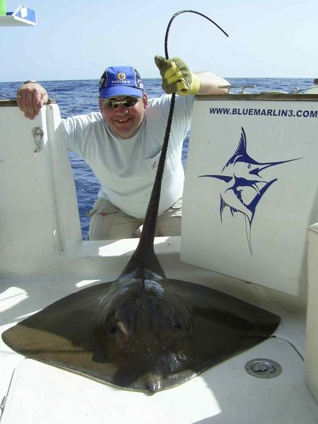 10/11 common stingray Cavalier & Blue Marlin Sport Fishing Gran Canaria