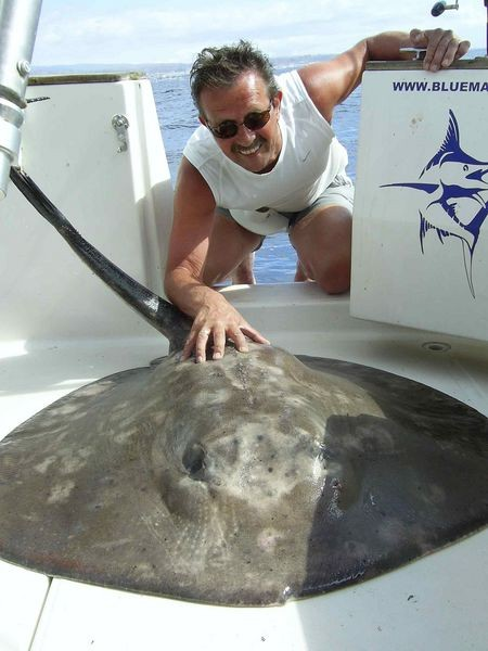 13/11 roughtail stingray Cavalier & Blue Marlin Sport Fishing Gran Canaria