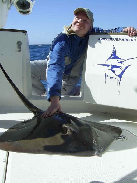 07/02 common stingray Cavalier & Blue Marlin Sport Fishing Gran Canaria