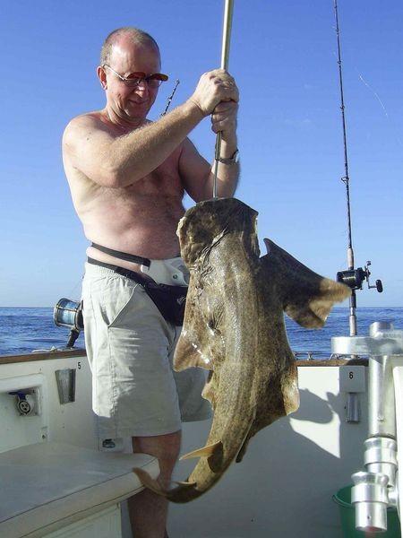 13/02 angel shark Cavalier & Blue Marlin Sport Fishing Gran Canaria