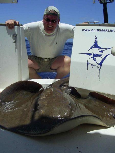 23/04 common stingray Cavalier & Blue Marlin Sport Fishing Gran Canaria