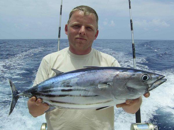 31/05 skipjack tuna Cavalier & Blue Marlin Sport Fishing Gran Canaria