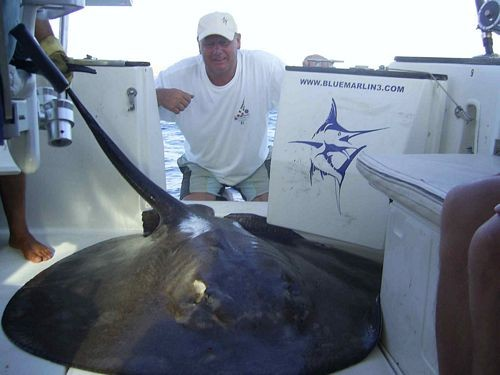13/09 roughtail stingray Cavalier & Blue Marlin Sport Fishing Gran Canaria