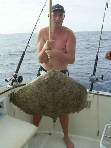 17/09 butterfly ray Cavalier & Blue Marlin Sport Fishing Gran Canaria